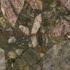 Verde Marinacae Granite